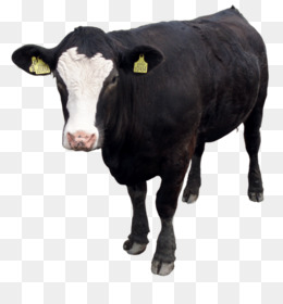 Holstein Cow PNG HD - 131006