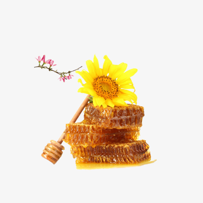 HD sunflower honey PNG materi