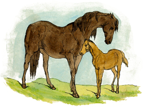 Horse And Foal PNG-PlusPNG.com-462 - Horse And Foal PNG