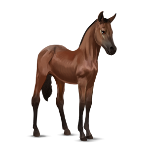 File:Bay - KWPN Foal.png - Horse And Foal PNG