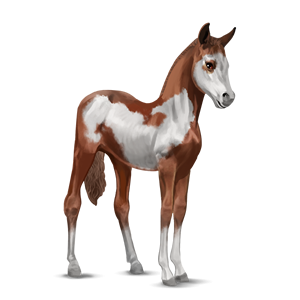 File:Paint Horse Foal - Chestnut Overo.png - Horse And Foal PNG