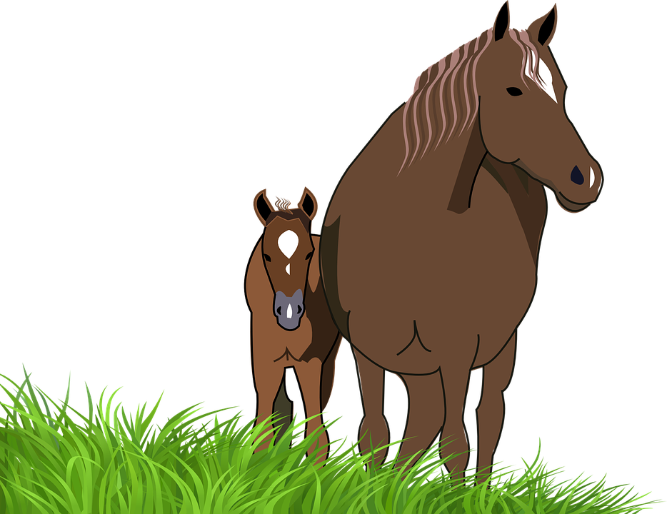 foal mare horse animal - Horse And Foal PNG