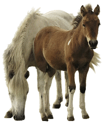 Horse and Foal - Horse And Foal PNG