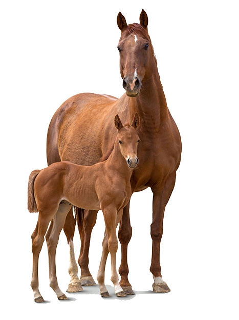 Our Horses, Our Edge - Horse And Foal PNG