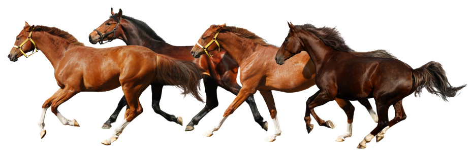 Download PNG image - Horse Png 9 - Horse HD PNG
