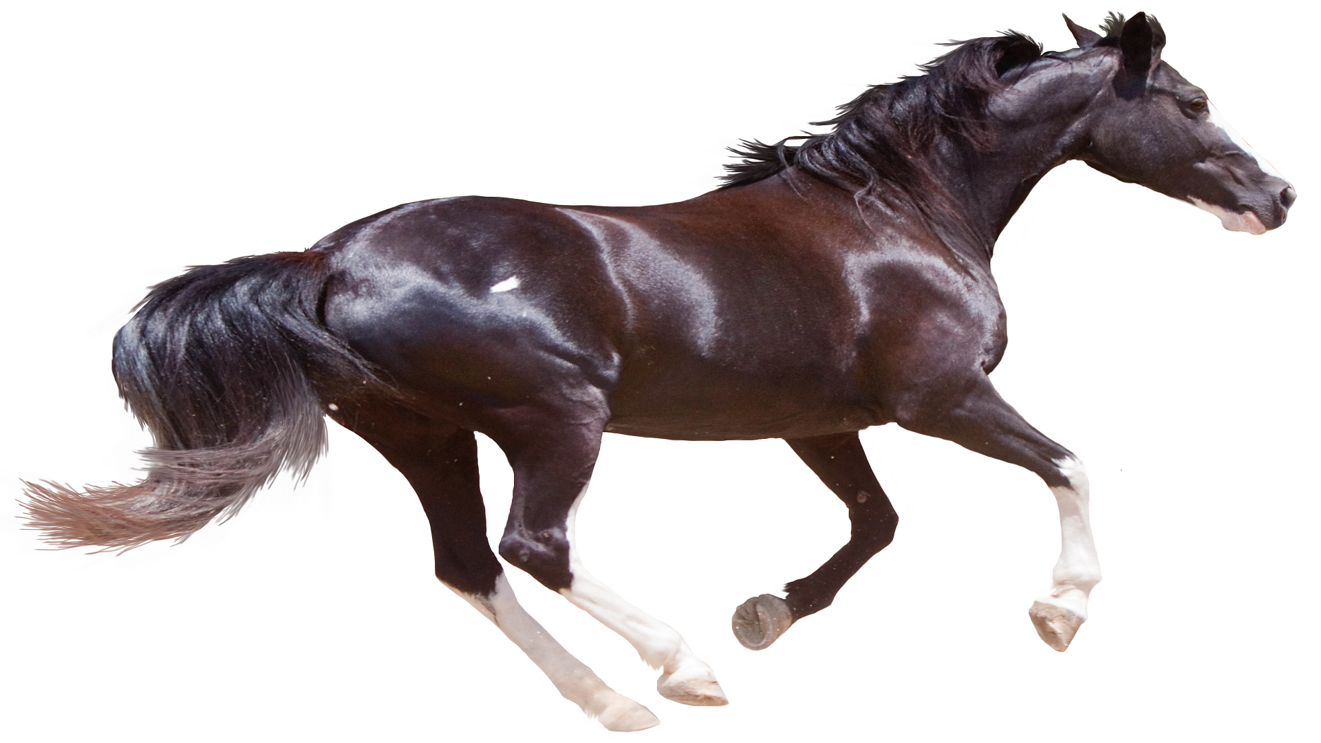 . PlusPng.com horse-brown-nature-pictures - Horse HD PNG