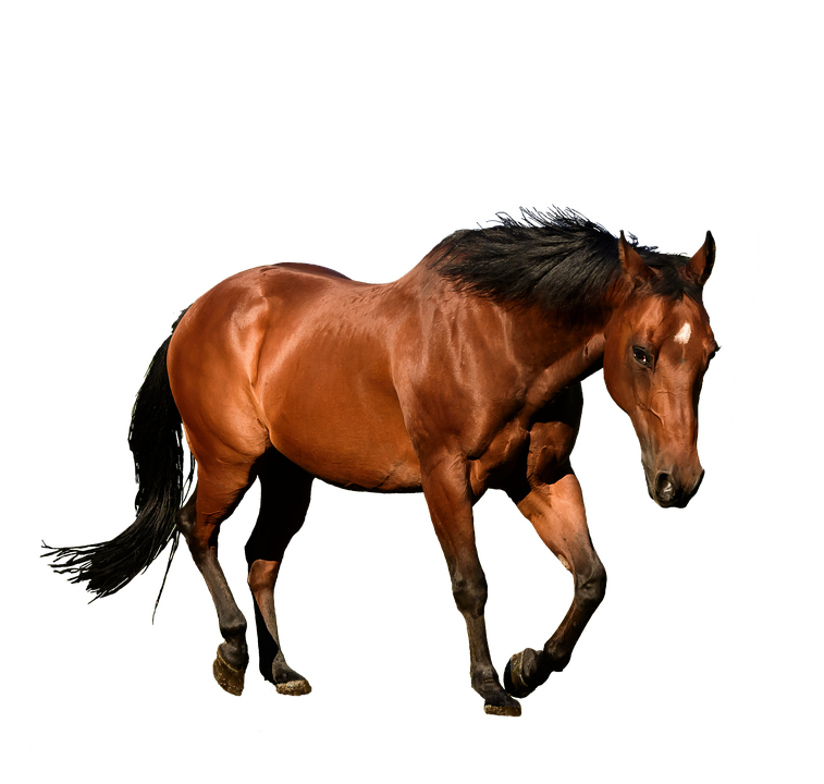 Horse, Cutout, Isolation, Bay, Animal, Equestrian - Horse HD PNG