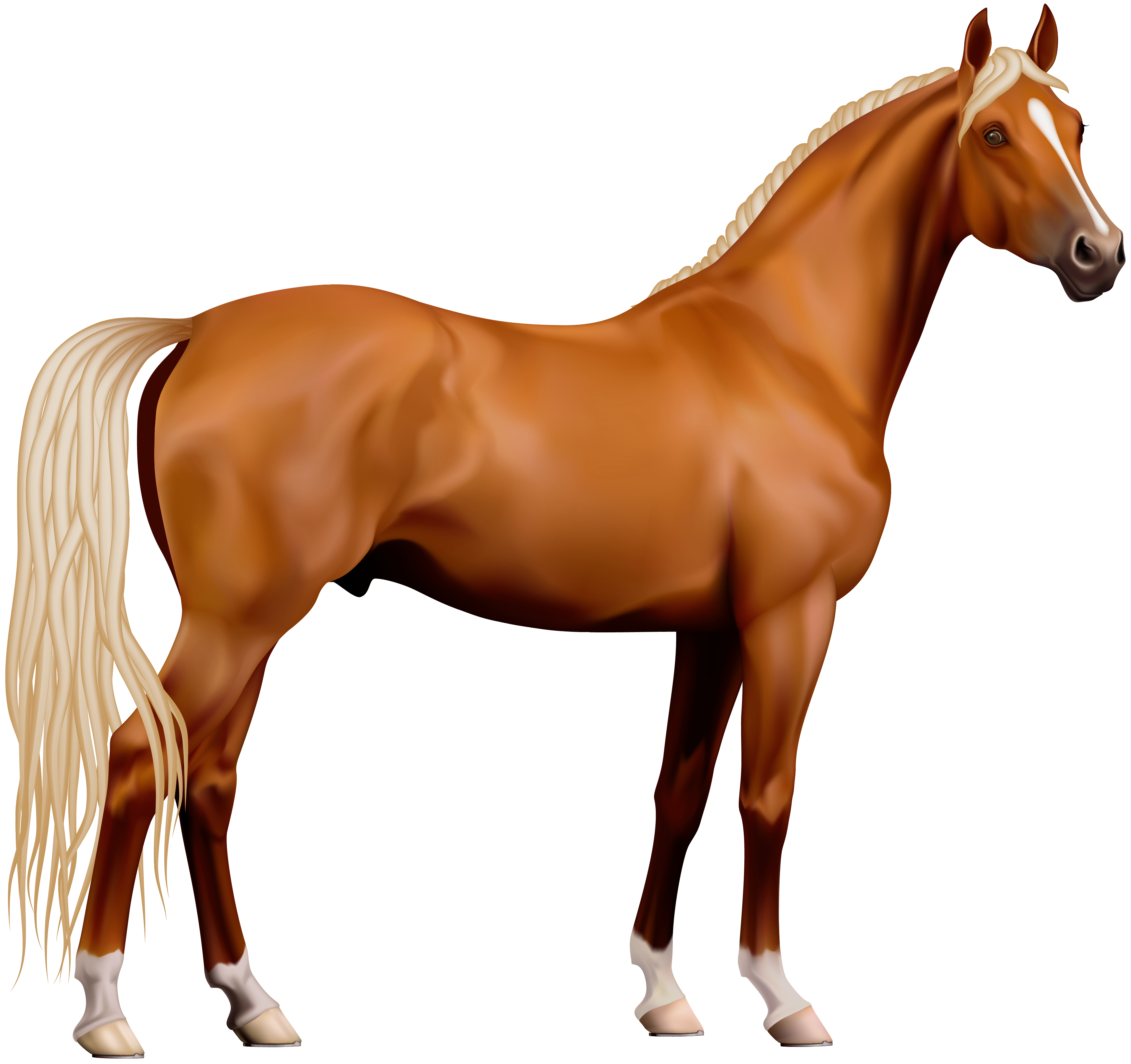 Horse Image - Horse HD PNG