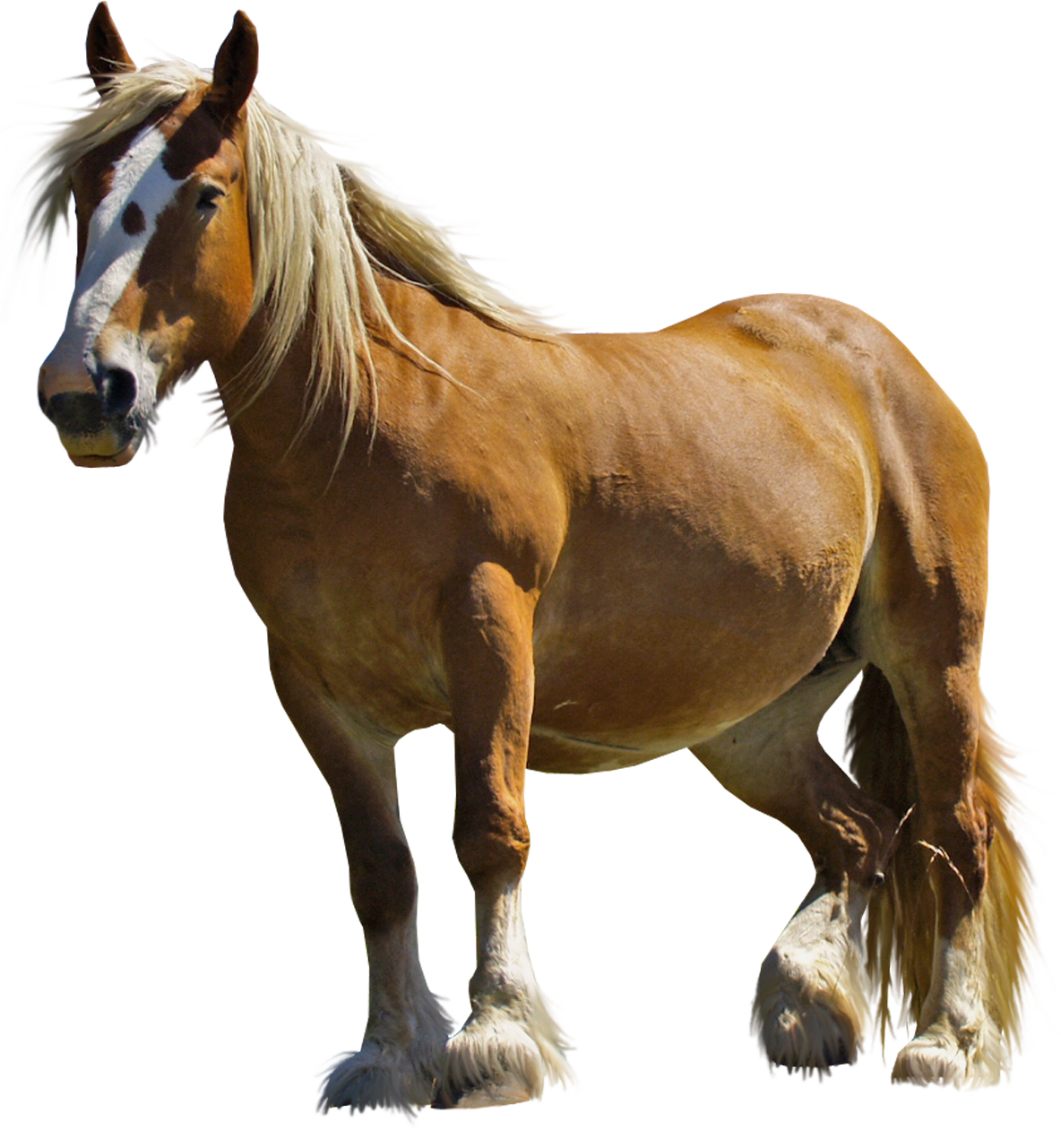 Horse Png - Free Icons And PNG Backgrounds - Horse HD PNG
