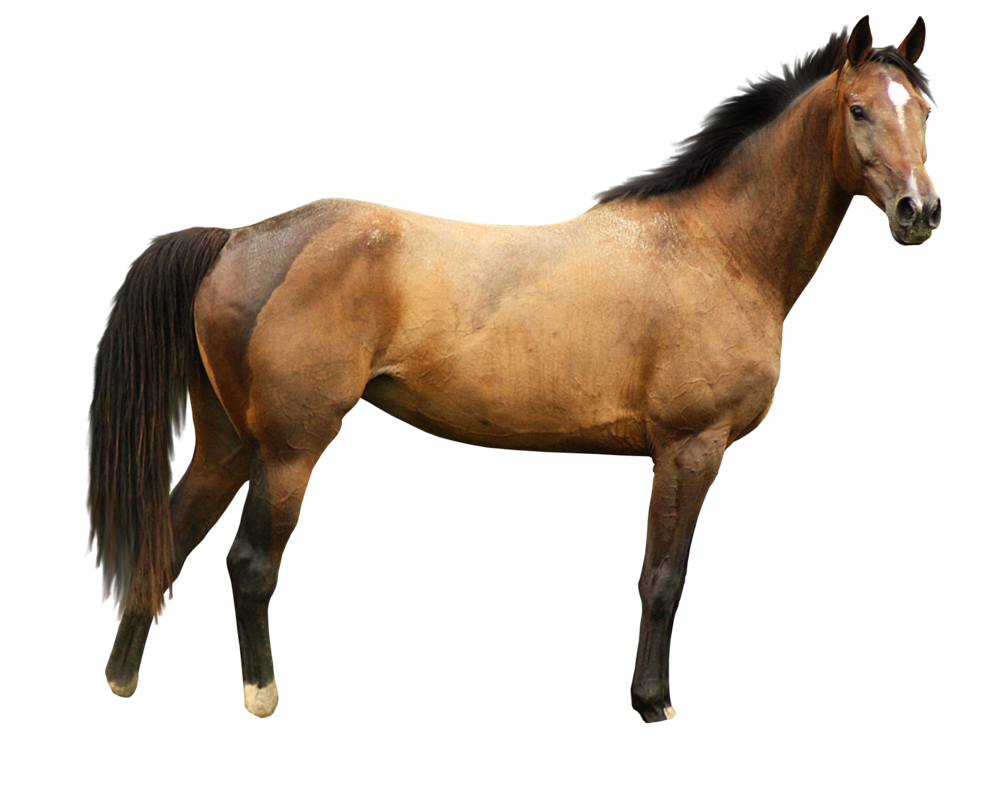 Horse png image - Horse HD PNG