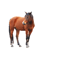 Horse Png Image PNG Image - Horse HD PNG