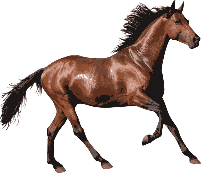 Horse, Race Horse, Animal, Equine, Equestrian, Riding - Horse HD PNG