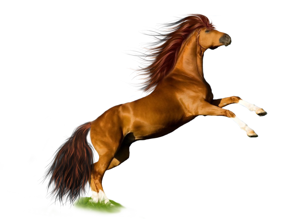 Png Horse 1 by Moonglowlilly PlusPng.com  - Horse HD PNG