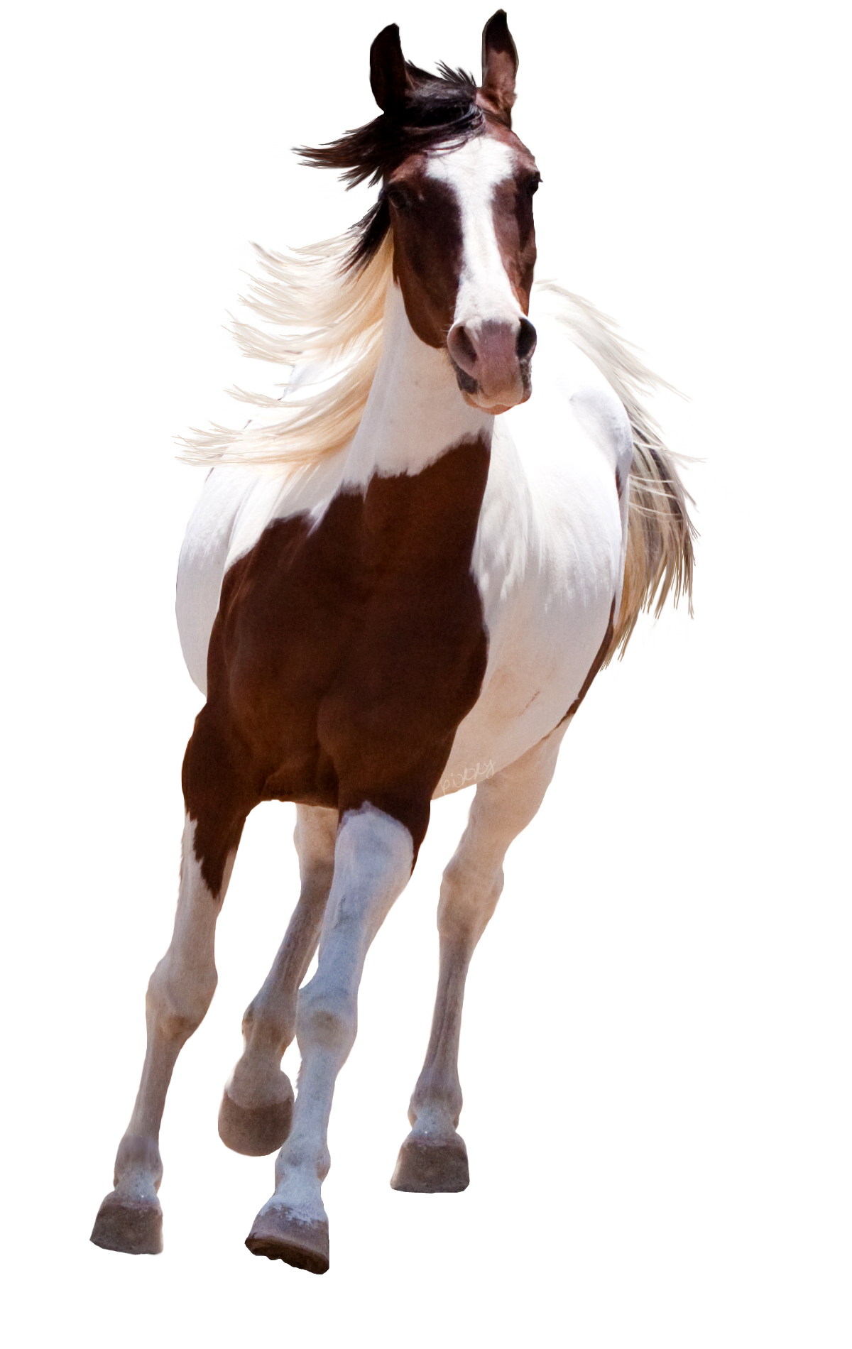 Running Horse Png - Horse HD PNG