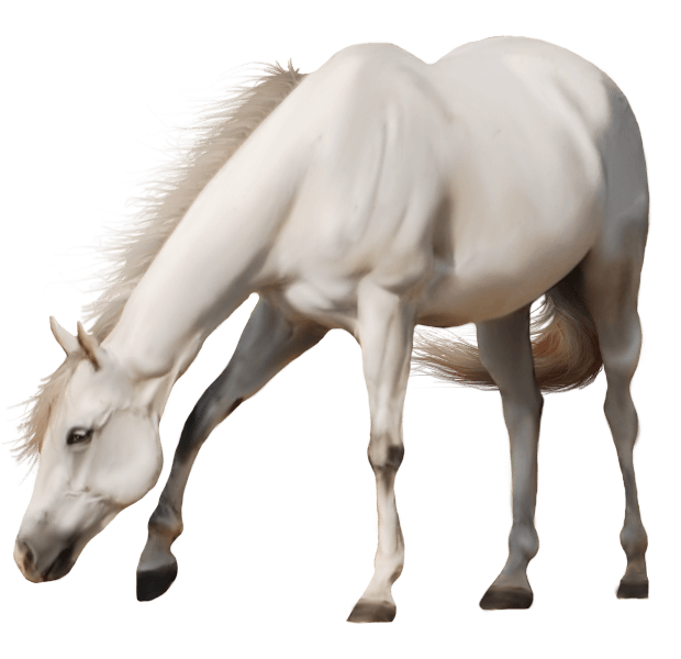 Horse PNG - 26993