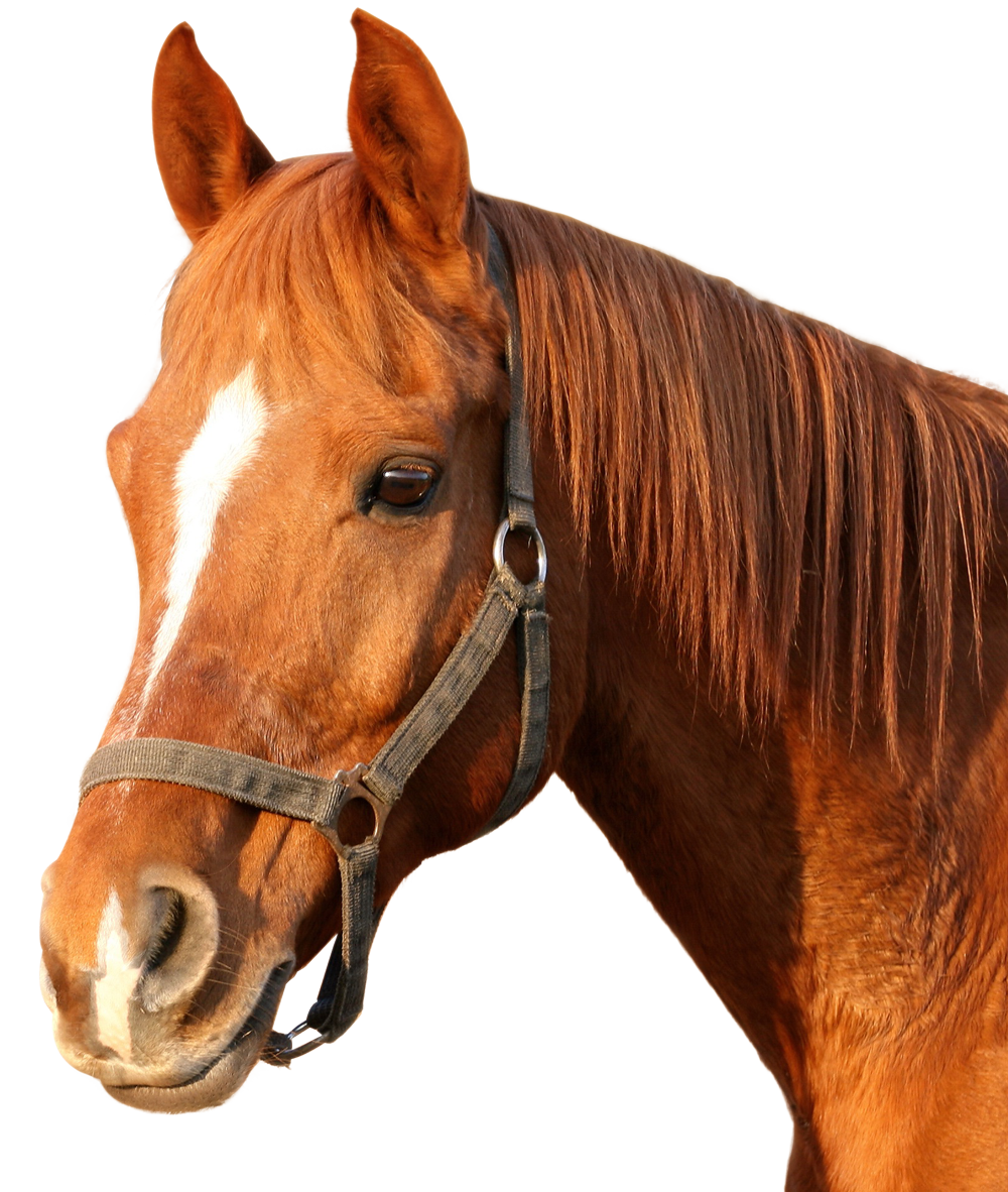 Horse PNG - 27000