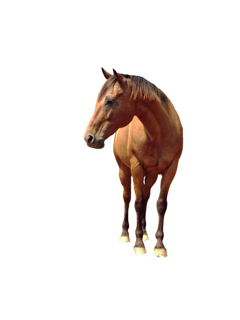 Horse PNG - 26994