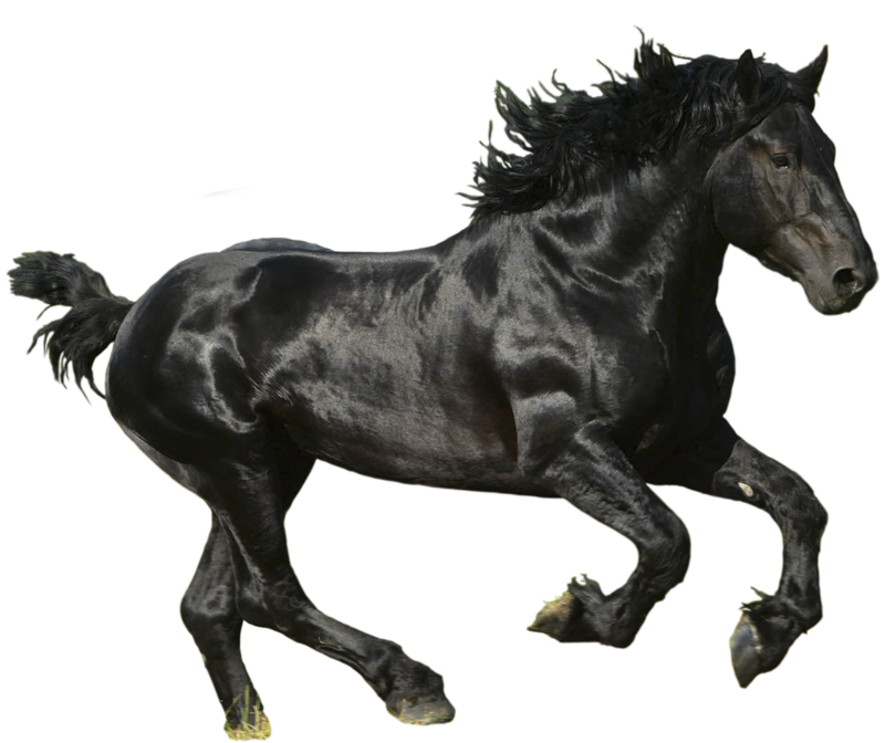 Horse PNG - 27002