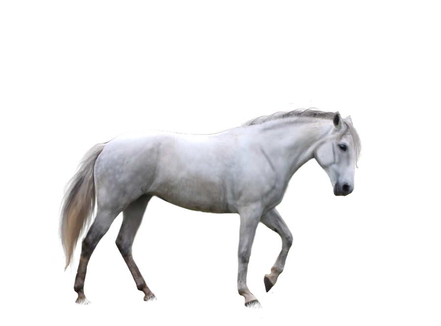 Horse PNG - 26995