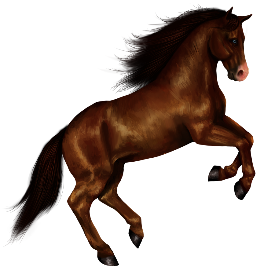 Horse Png image #22540 - Horse PNG