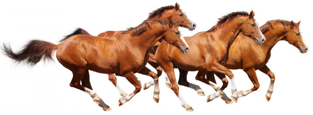 Horse Png image #22550 - Horse PNG