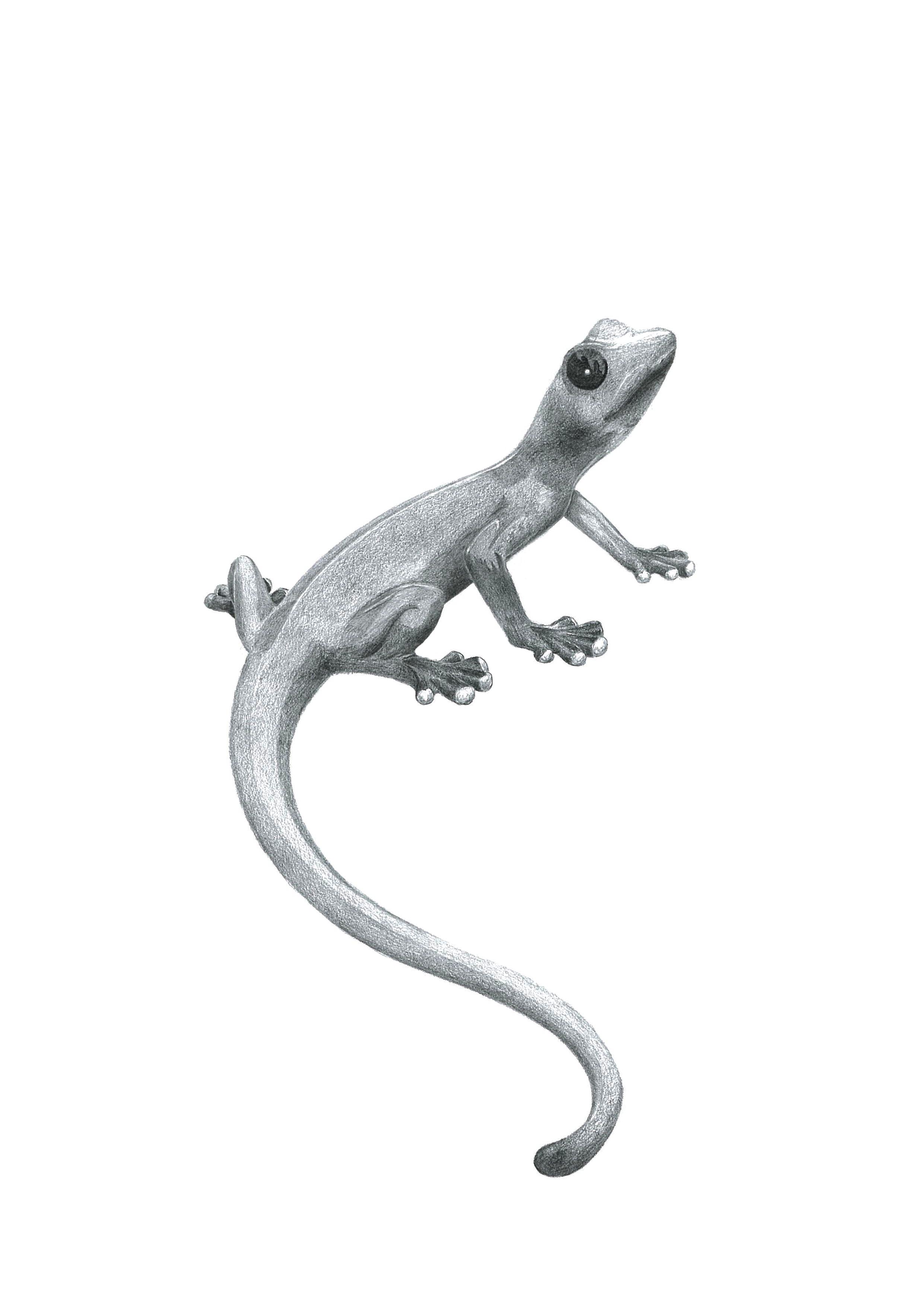 House Lizard PNG - 45583