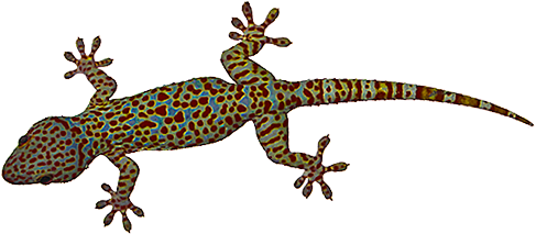 House Lizard PNG - 45576