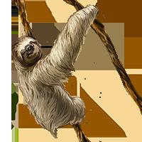 Sloth PNG - 6267