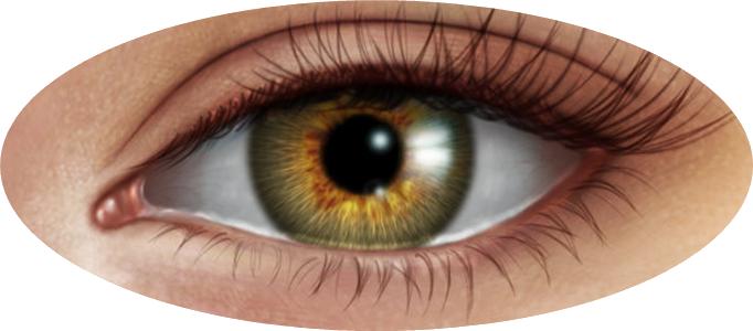 Eye PNG - 3031