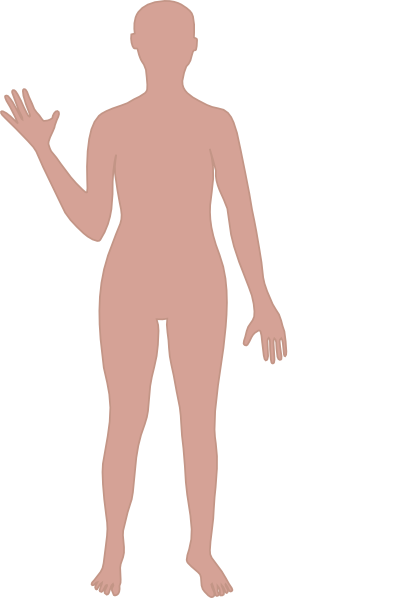 Body Outline clip art - vector clip art online, royalty free - Human Figure PNG HD