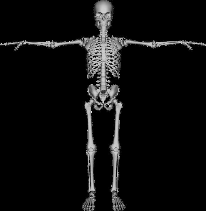 Bones, Dead, Figure, Halloween, Human - Human Figure PNG HD