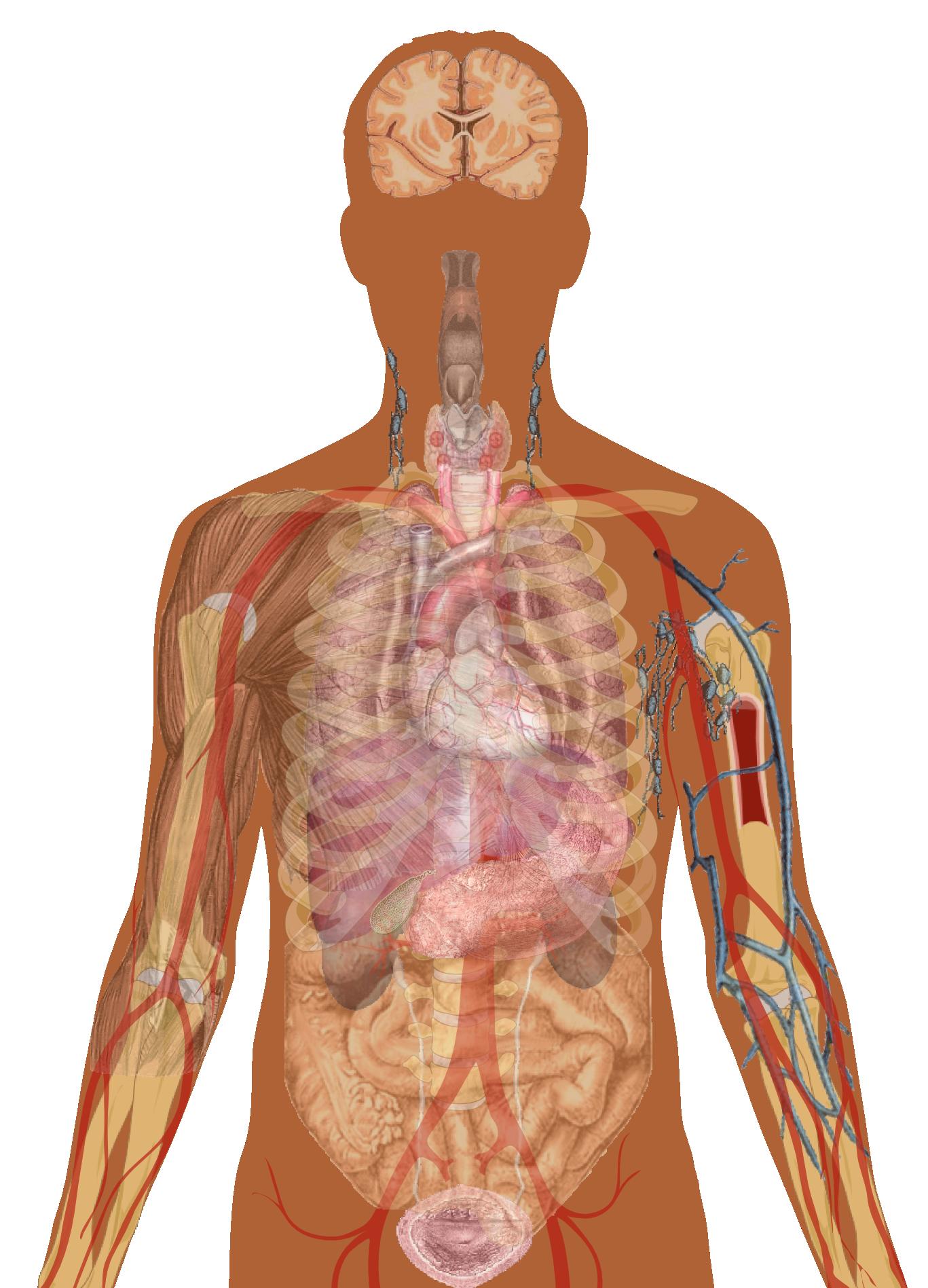 Human Figure PNG HD - 120716