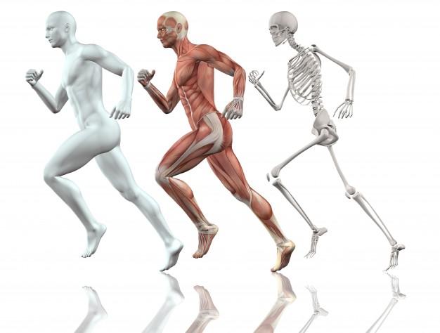 The human body, running - Human Figure PNG HD