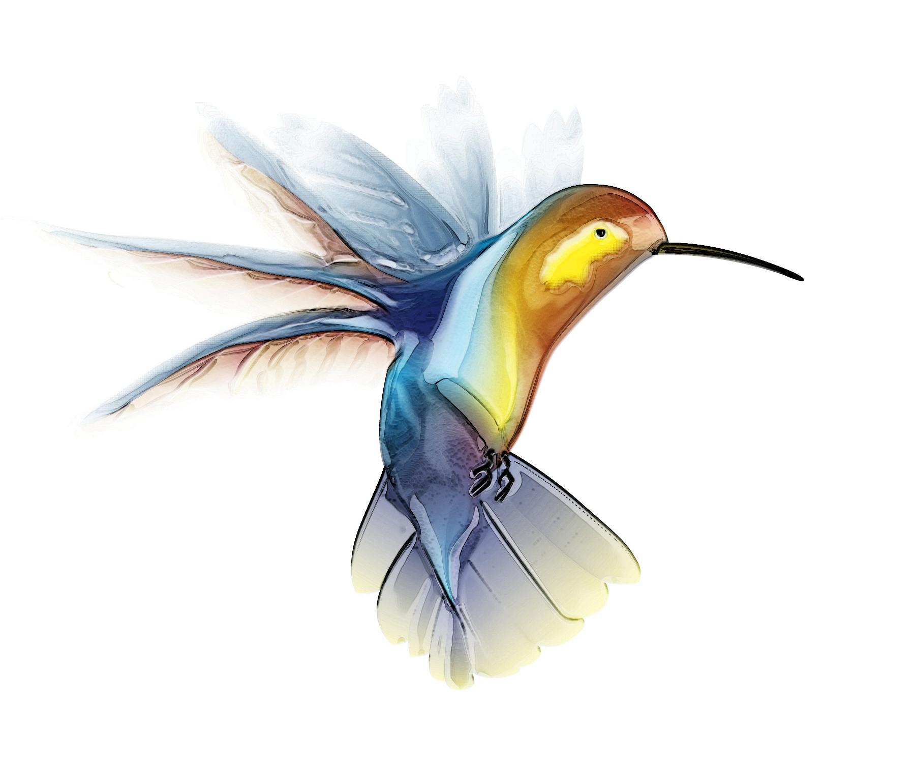 Hummingbird Image