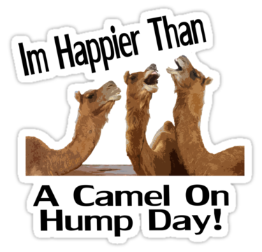 Picture - Hump Day PNG HD