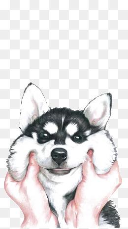 Husky PNG - 25559