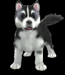 Husky PNG - 25555