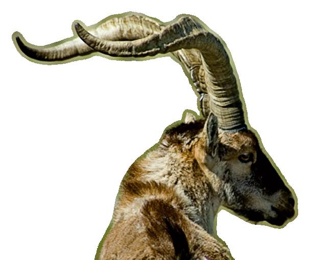 Ibex PNG-PlusPNG.com-615 - Ibex PNG