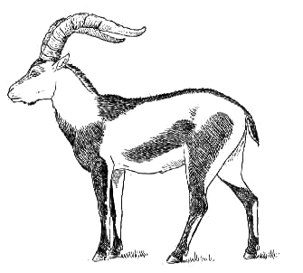 Download pngtransparent PlusPng.com  - Ibex PNG