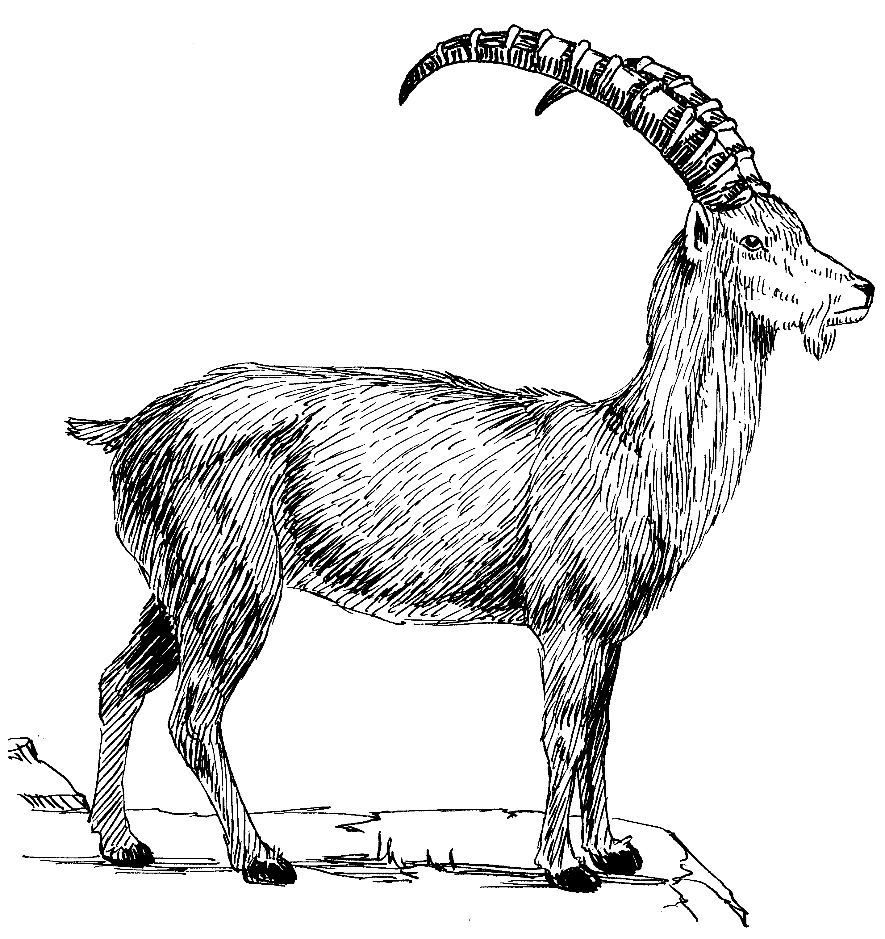 File:Ibex (PSF).png - Ibex PNG