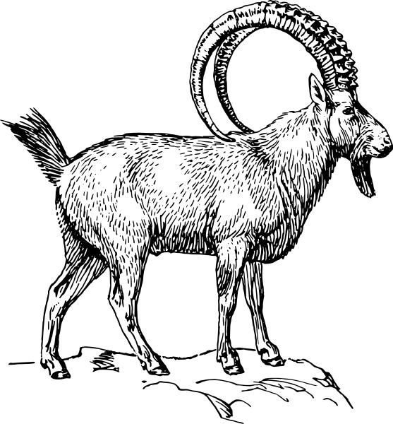 Ibex - Ibex PNG