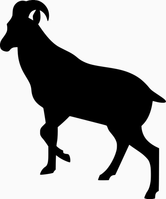 Ibex Nilgiritragus hylocrius - Ibex PNG