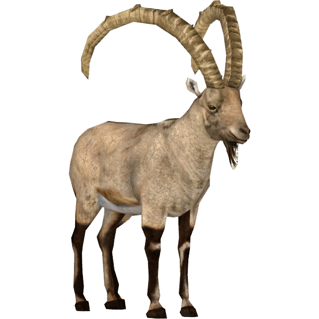 Image - Siberian Ibex (Tamara Henson).png | ZT2 Download Library Wiki |  FANDOM powered by Wikia - Ibex PNG