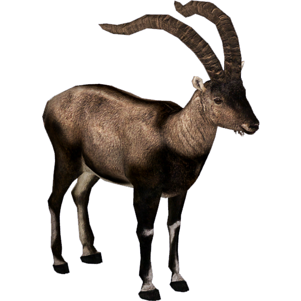 Pyrenean Ibex (ZTABC Team) | ZT2 Download Library Wiki | FANDOM powered by  Wikia - Ibex PNG