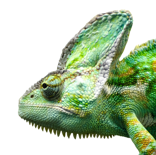 Iguana PNG - 23365