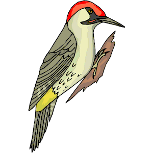 Image result for woodpecker png - Woodpecker PNG