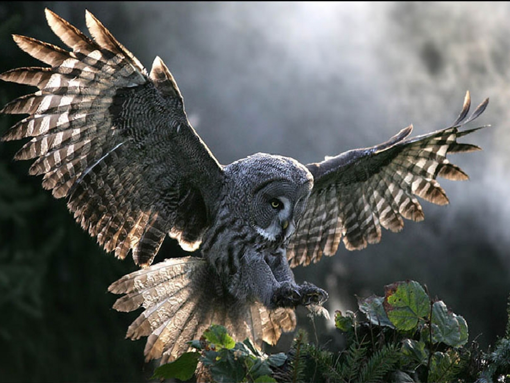 90df9a9.png - Images Owls PNG HD