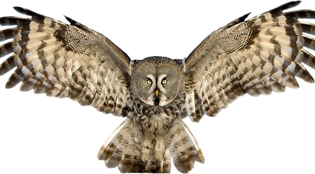 Download - Images Owls PNG HD