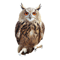Owl Png Picture PNG Image - Images Owls PNG HD