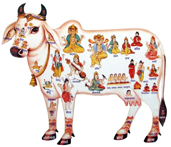 Indian Cow With Krishna PNG - 68415